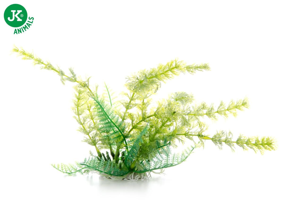 JK ANIMALS Akvarijní rostlinka Cabomba zelená, 14–17 cm | © copyright jk animals, všechna práva vyhrazena