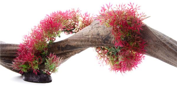 Akvarijní rostlinka Mech flex. červený