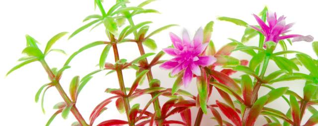 Akvarijní rostlinky MIX small