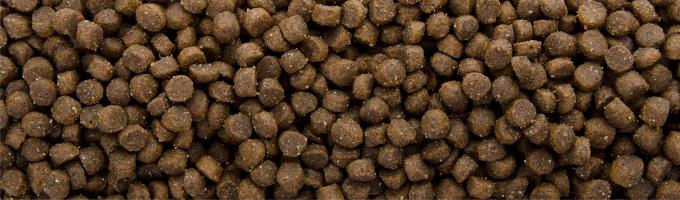Sam's Field Cat Kitten, superprémiové granule – kompletní krmivo pro koťata