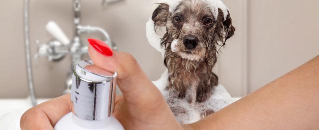 Prémiový šampon pro štěňata, 250ml