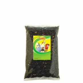Avicentra – slunečnice černá